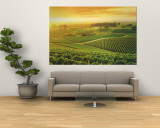 Vineyard, Hunter Valley, Australia Mural por Peter Walton