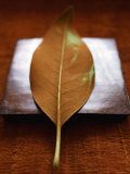 Sepia Leaf Photo