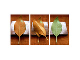 Green Leaf on Metallic Square Prints