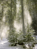 Winter Forest I - Photo