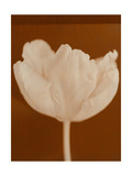 Tulip Serenity Prints