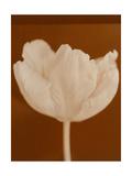 Tulip Serenity Prints