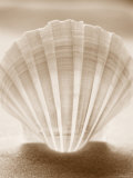 Luminescent Irish Deep Seashell Posters