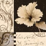 Hibiscus Blossom II Prints by Katrina Craven