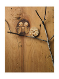 Wood Owl Knots Kunstdruck
