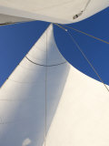 White Sails Flying Photo