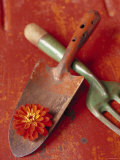 Trowel and Blossom Photo