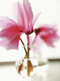 Fuchsia Blossoms in Clear Vase Prints