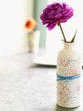 Peony in Vase Photo