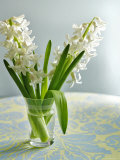 White Carnegie Hyacinth Prints