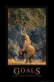 Doelen, olifant reikt hoog, met Engelse tekst: Goals Foto
