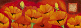Planche d'Anemones Orange Prints by Sylvi Pasquier