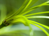 Close View of Green Flower, Groton, Connecticut Fotoprint van Todd Gipstein