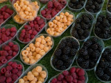 Berries for Sale at the Rialto Market in Venice, Italy Photographic Print by Todd Gipstein