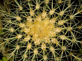 Close View of the Spiked Flower of a Succulent Plant, Groton, Connecticut Photographic Print by Todd Gipstein