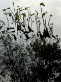 Aquatic Plants Growing in a Marsh Where a Tree is Reflected, Groton, Connecticut Photographic Print by Todd Gipstein