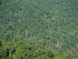 Aerial View of a Deciduous Forest, Virginia Photographic Print by Stacy Gold