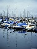 Boats in a Harbor Photographic Print by Stacy Gold
