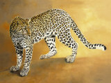 Leopard de Seronera Print by Danielle Beck