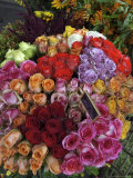 Colorful Rose Flowers for Sale on Street, Paris, France Photographic Print by  Brimberg & Coulson