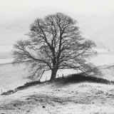 Misty Tree, Peak District, England Posters by Dave Butcher