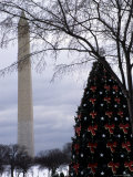 Christmas Tree on the Mall of Downtown D.C., Washington, D.C. Photographic Print by Stacy Gold