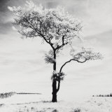 Lone Tree no. 3, Peak District, England Prints by Dave Butcher