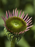 Close View of a Flower, Groton, Connecticut Photographic Print by Todd Gipstein