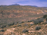 Arid Landscape of Arizona Photographic Print by Stacy Gold