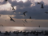 Birds Flock for Food in Florida Photographic Print by Stacy Gold