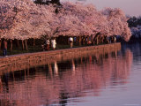 Bikers and Pedestrians Share a Scenic Trail Full of Cherry Blossoms, Washington, D.C. Photographic Print by Kenneth Garrett