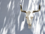 Animal Skull and Horns Hanging on Blue Wall, California Photographic Print by Gina Martin