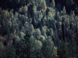Aerial View of a Forest in the Clearwater Wilderness, of Washington Photographic Print by Ira Block