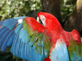 Colorful Macaw Photographic Print by Stacy Gold