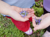 Children Pick Purple Flowers While Visiting the National Mall, Washington, D.C. Photographic Print by Stacy Gold