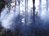 Charred Tree Trunks and Smoking Foliage Fill the Air from a Bush Fire, Australia Photographic Print by Jason Edwards