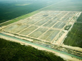 Aerial View of Shrimp Ponds under Construction, Belize Photographic Print by Tim Laman