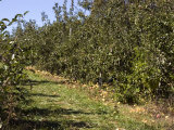 Apple Orchard Photographic Print by Stacy Gold