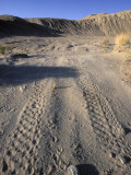 ATV Damage along Palm Wash in the Desert Cahuilla Archaeology Area, California Photographic Print by Rich Reid