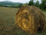 Bail of Hay in a Field in Tuscany, Italy Photographic Print by Todd Gipstein