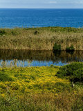 Coastal Marshland on Block Island Sound, Rhode Island Photographic Print by Todd Gipstein