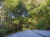 Bow of Blue Boat Moving Through Overgrown Jungle on Belize River Photographic Print by James Forte