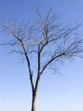 Bare Tree in Dc, Washington, D.C. Photographic Print by Stacy Gold
