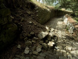 Broken Stone Wall Cascades Stones Along a Path at Brolio Castle, Tuscany, Italy Photographic Print by Todd Gipstein