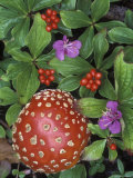 Bunchberry and Fly Agaric, Alaska Photographic Print by Rich Reid