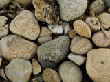 Close-Up of Rocks on a Beach, Block Island, Rhode Island Photographic Print by Todd Gipstein