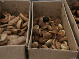 Boxes of Breads and Pastries, Mexico Photographic Print by Gina Martin