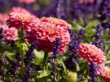 Closeup of Colorful Flowers in Butchart Gardens Photographic Print by Tim Laman