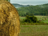 Close View of a Bail of Hay in Front of a Field of Hay Bails, Tuscany, Italy Photographic Print by Todd Gipstein