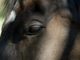 Close-Up of the Eye of a Horse, Block Island, Rhode Island Photographic Print by Todd Gipstein